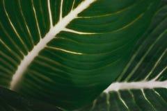 Поверхность лист предпосылки Стоковая Фотография
