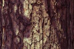 Поверхность корки кожи дерева ретро коричневого цвета grunge деревянной Стоковые Фото