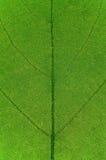 поверхность листьев Стоковая Фотография RF