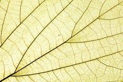 поверхность листьев Стоковые Фотографии RF