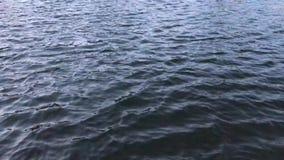 Поверхность озера на природе сток-видео