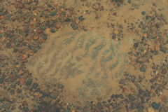 Поверхность песка и воды, живая природа северная Стоковые Фотографии RF
