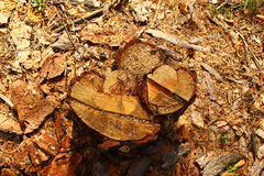 Поверхность пня крупного плана дерева в лесе Стоковое Фото