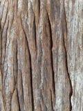 поверхность древесины от отключения летних отпусков Стоковая Фотография RF