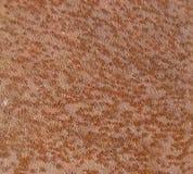 поверхность ржавчины металла Стоковая Фотография RF