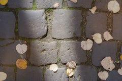 Поверхность улицы булыжника с foilage падения Стоковая Фотография