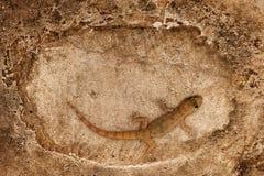 поверхность ящерицы сидя каменная Стоковая Фотография