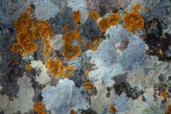 поверхность multycolored лишайниками каменная Стоковые Изображения RF