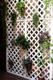Повешенные в горшке цветки которые украшают окружающую среду стоковые фотографии rf
