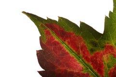 поворачивать листьев Стоковые Изображения