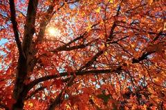 Поворачивая листья Стоковое Изображение RF