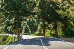 Поворот дороги между деревьями Стоковые Изображения RF