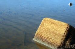 Повреждение окружающей среды загрязнения воды Стоковое Изображение