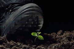 повреждение относящое к окружающей среде Стоковая Фотография