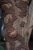 Повреждение термита стоковые изображения rf