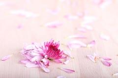 Повреженные цветки мамы на деревянной предпосылке Стоковые Фотографии RF