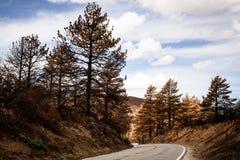 Повреждение лесного пожара Стоковая Фотография RF