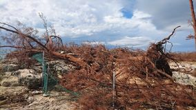 Повреждение урагана Стоковое Изображение RF