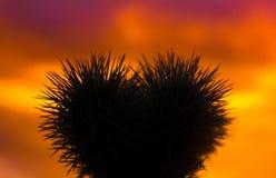 Повреждения влюбленности Стоковые Фотографии RF