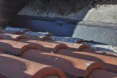 Повреждения голубя на крыше Стоковые Фото