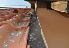Повреждения голубя на крыше Стоковые Изображения