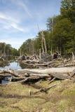 Поврежденные леса - Аргентина - Ushuaia - Огненная Земля стоковые изображения