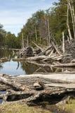 Поврежденные леса - Аргентина - Ushuaia - Огненная Земля стоковые изображения rf