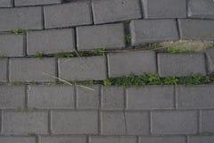 Поврежденные плитки на тротуаре Стоковое Изображение RF