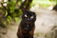 Поврежденный красивый кот Стоковые Фото