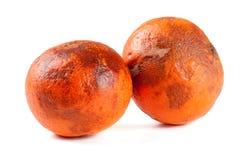 2 поврежденных tangerines изолированного на белой предпосылке Стоковое Фото