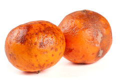 2 поврежденных tangerines изолированного на белой предпосылке Стоковые Фото