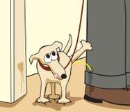 повстанец собаки Стоковое Фото