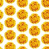 Повторение безшовной картины желтого patula tagetes цветков стоковое фото
