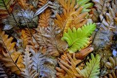 Повторенные формы запутанных листьев папоротника показывают цикл жизни от рождения к смерти стоковое изображение rf