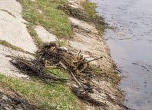 Погань на озере банка Стоковое Изображение RF