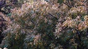 Погода сильного ветера деревьев дождя акции видеоматериалы