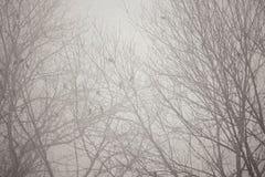 Погода зимы Стоковое Изображение