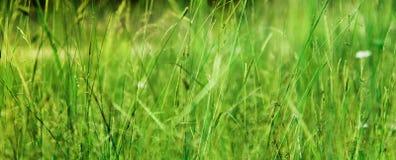 Погода свежей травы луга поля солнечная Стоковая Фотография