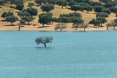 Погруженное в воду дерево Стоковое Фото