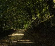 Погуляйте в парке города покрытом с деревьями Стоковые Изображения RF
