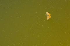 Поглощенная бабочка в Стоковое Изображение