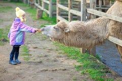 Подавать маленькой девочки two-humped Стоковые Фото