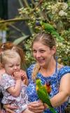 Подавая красочная радуга Lorikeets попугая Стоковая Фотография