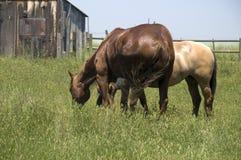 подавая лошади 2 Стоковое Фото