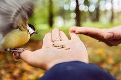 Подавая птицы в парке Стоковая Фотография
