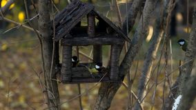Подавая птицы зимы концепция: Семена подсолнуха большого Parus синиц главные получая и гайки кедра на деревянном фидере птицы Стоковое фото RF
