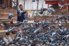 Подавая стадо голубей в Непале стоковые фото