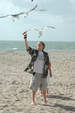 подавая чайки Стоковые Изображения RF