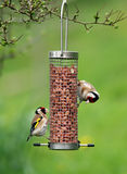 подавая goldfinches стоковое изображение rf