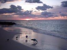 подавая tropics Стоковые Фото